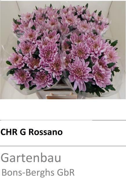 <h4>CHR E ROSSANO</h4>