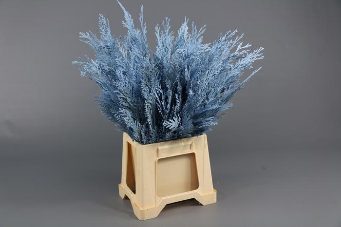 <h4>Conifeer Geverfd Blauw Licht</h4>