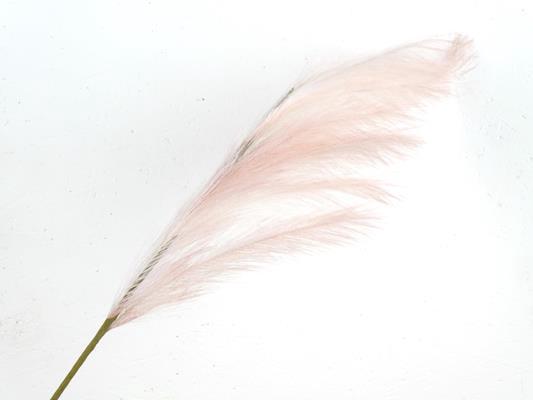 <h4>Af Pampas 100cm Lt. Pink</h4>