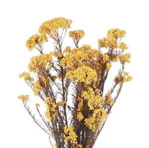 Helychrisium Diosmi Yellow Citr. HDI/0300