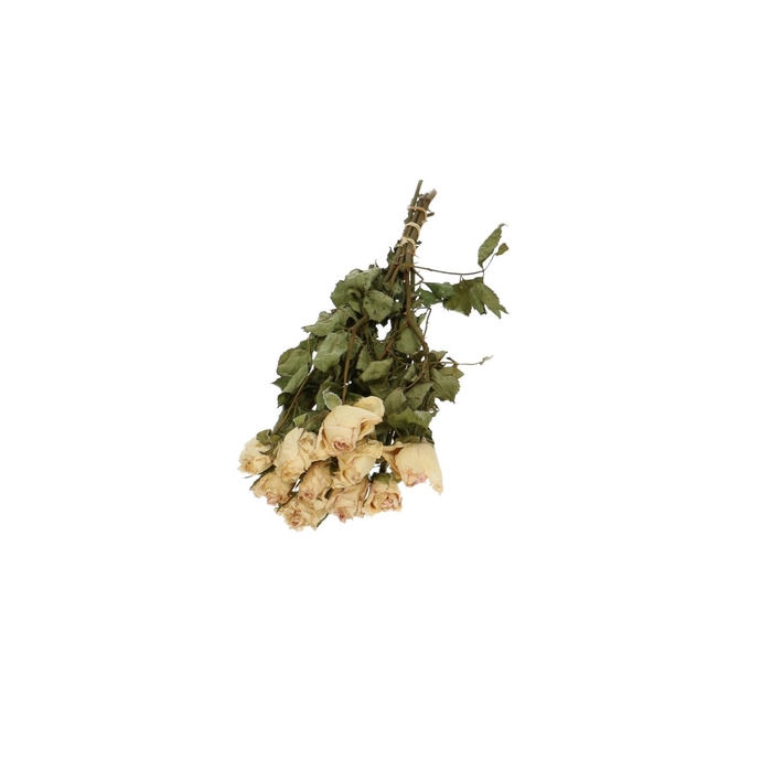 <h4>Droogbloem Roses Parfum 25cm x10 20g</h4>