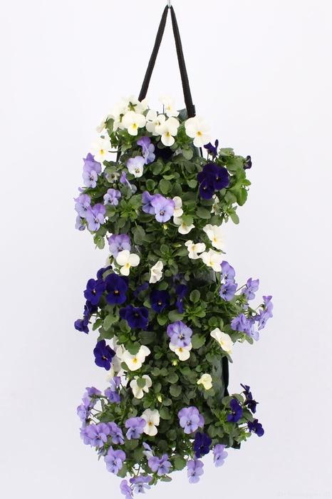 <h4>Wandhanger Viola Cornuta Blue Mix</h4>