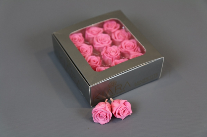 <h4>Rosa Preserved Baby Pink Mini Petite</h4>