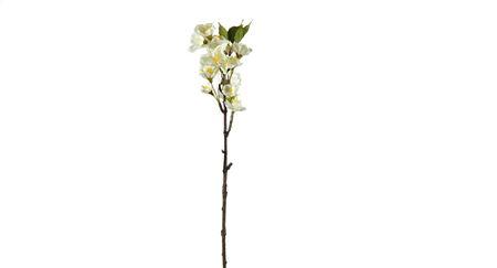 <h4>Flower Blondel  h41 white</h4>