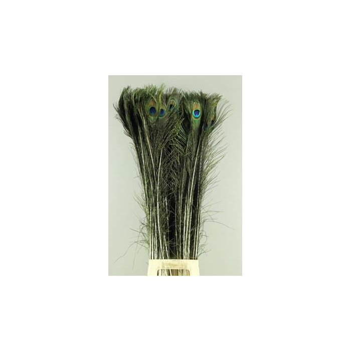 <h4>Feather Peacock 110cm</h4>