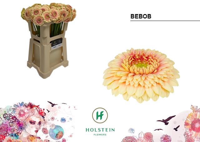 <h4>GE BV water Gerponi Bebob</h4>