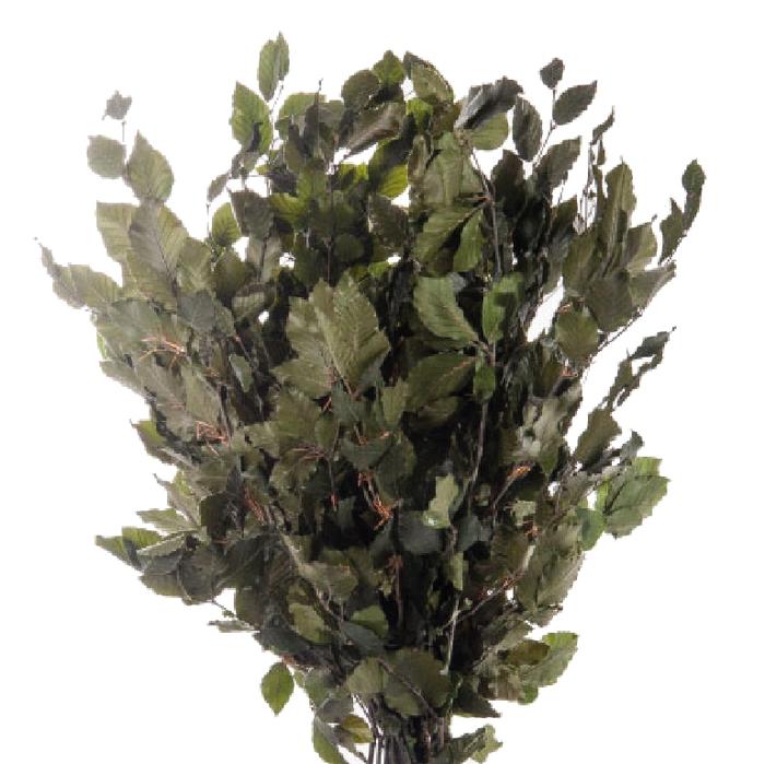 <h4>Fagus / Beech Green FAG/0105</h4>