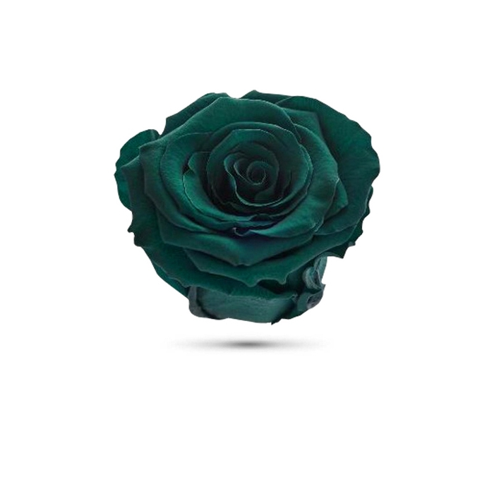 <h4>Rosa preservada cabeza verde oscuro</h4>