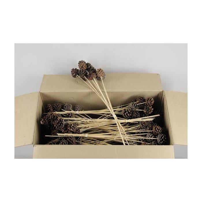 <h4>Stick Pine Cone Natural</h4>
