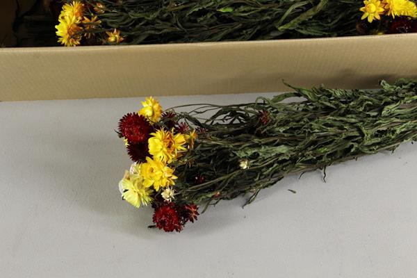 <h4>Df Helichrysum Mixed Bs</h4>