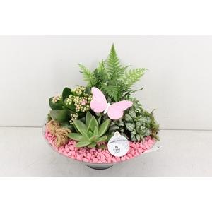 arr. PL - Glas schaal 30cm - roze