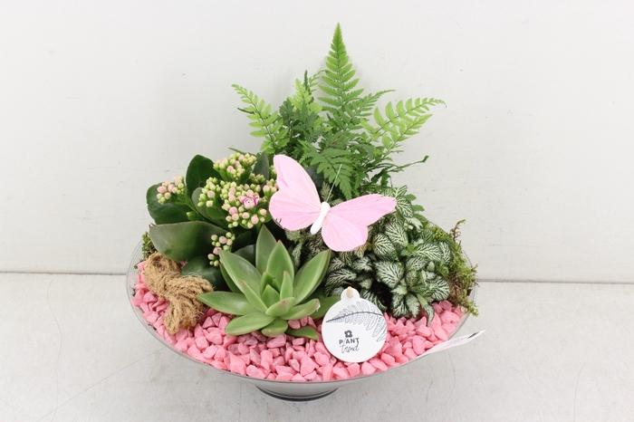 <h4>arr. PL - Glas schaal 30cm - roze</h4>