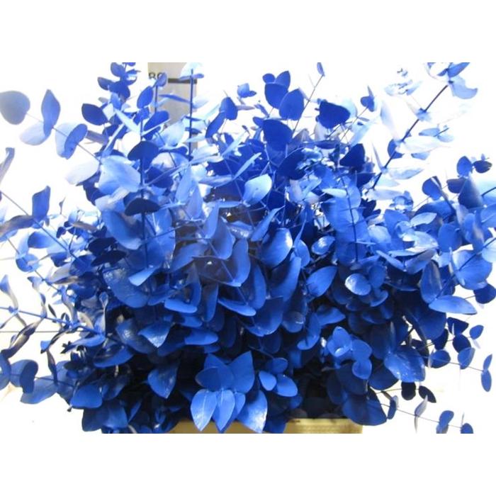 <h4>Euc Cinerea Blauw</h4>