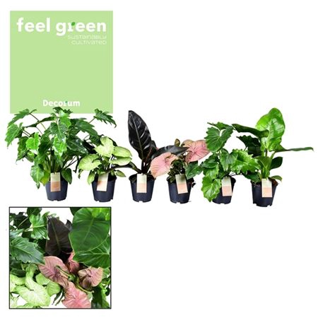 <h4>Ov Kamerplanten Gemengd Feel Green</h4>