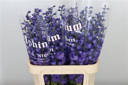 <h4>Delph El Christel Purple</h4>