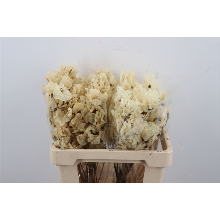 <h4>DRIED FLOWERS - BOUGAINVILLEA BIG GEBLEEKT 55</h4>