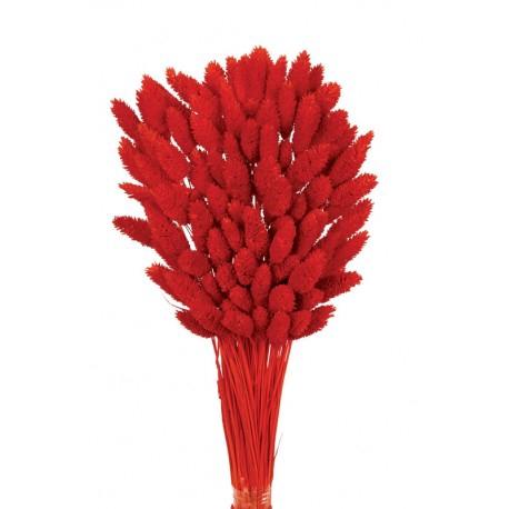<h4>Phalaris rojo seco</h4>