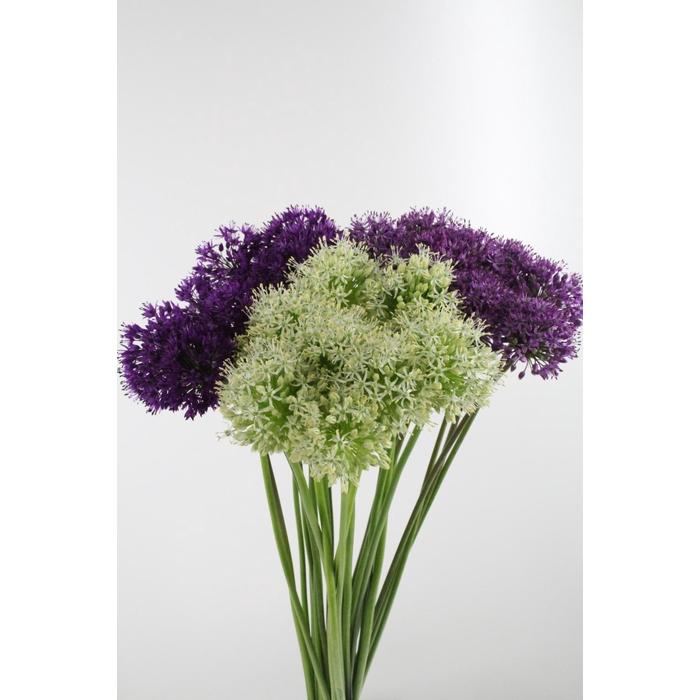 <h4>Allium Gemengd</h4>
