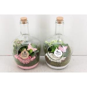 arr. PL - Fles met kurk - roze/wit
