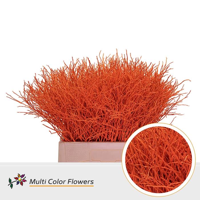 <h4>Heidelbeer Oranje</h4>