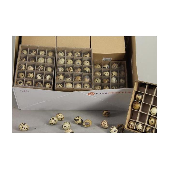 <h4>Egg Quail Box(60pcs)</h4>