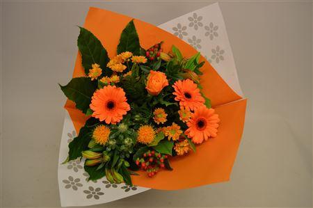 <h4>Bm Oranje</h4>