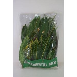 Tropical Leaf Mix 100 Leafs