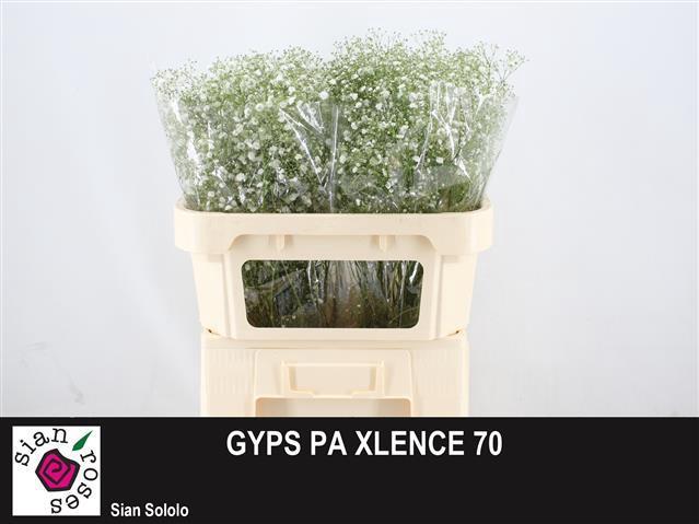 <h4>GYPS PA XLENCE</h4>