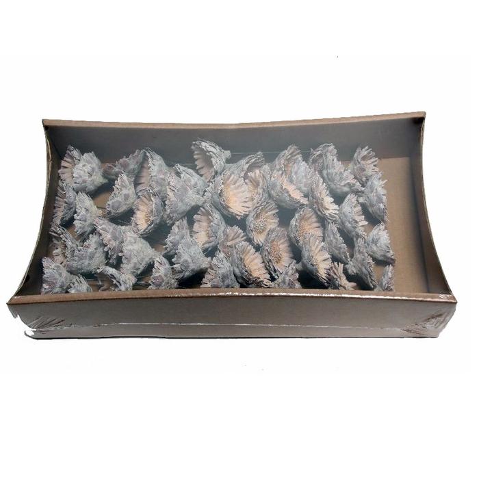 <h4>Dried articles Protea compacta/wire x55</h4>