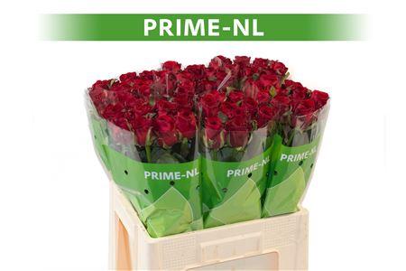 <h4>R GR RED NAOMI! - PRIME</h4>