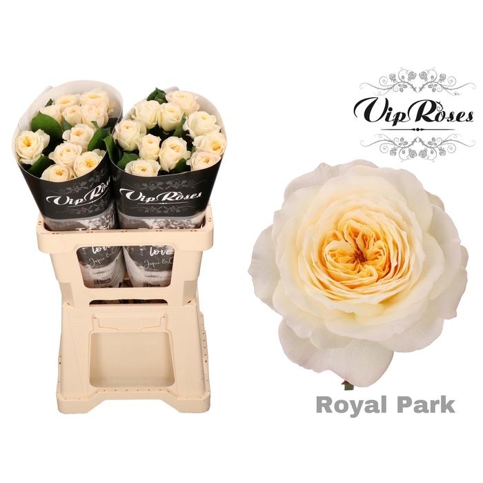 <h4>R GR ROYAL PARK x 20</h4>