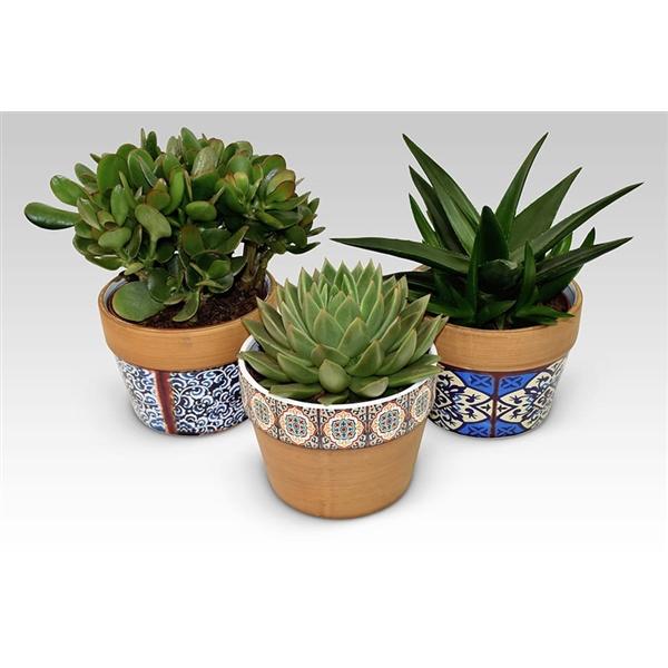 <h4>Succulents in Marrakesh ceramic</h4>