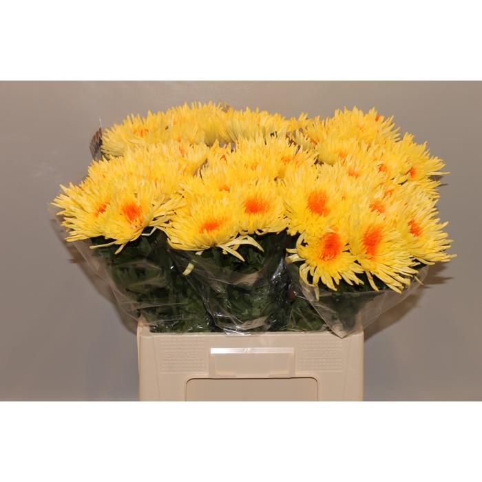 <h4>Chrys.Gepl.Anastasia geel Naturel Hart Oranje</h4>