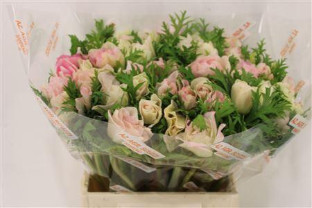 <h4>Anem Mistral Super Rosa Chiaro</h4>