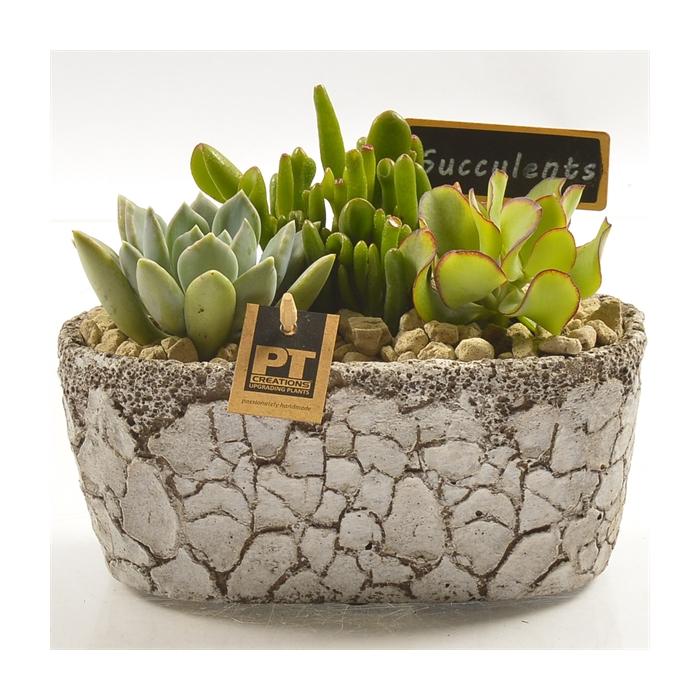 <h4>Arr.  Succulents L%</h4>