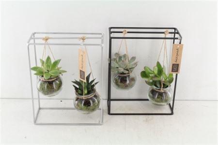 <h4>Arr. Mb Metaal Rek Duo Hanger - Succulent</h4>