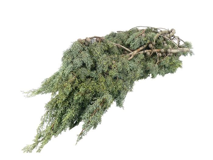 <h4>Cypresse</h4>