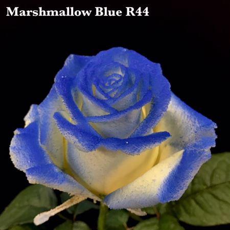 Bordeaux oder Gelb 24 // 8 mm Blau Braun 20 Satinrosen in Schwarz