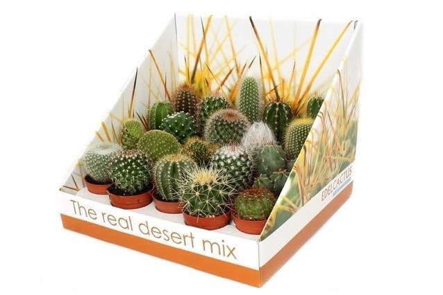 <h4>Cactus mix 5,5Ø 22cm RD01</h4>