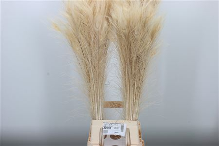 <h4>Dec Feather Peacock Bleached White</h4>