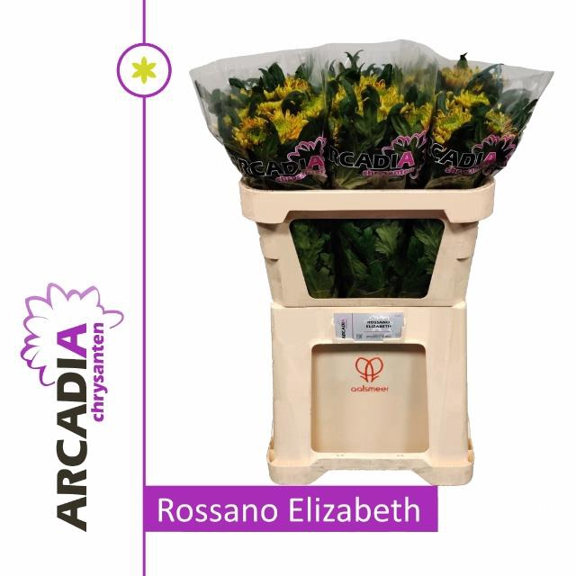 <h4>CHR G ROSS ELIZABETH</h4>