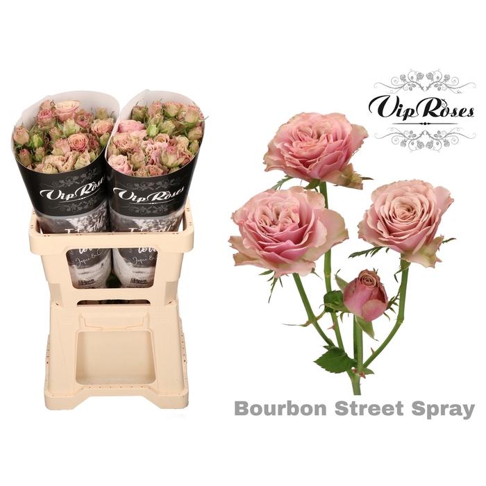 <h4>R TR BOURBON STREET</h4>