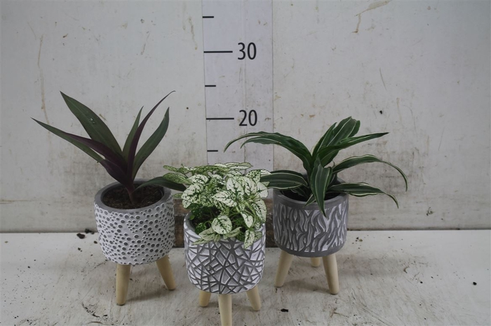 <h4>Plant Mix In Wooden Legs</h4>