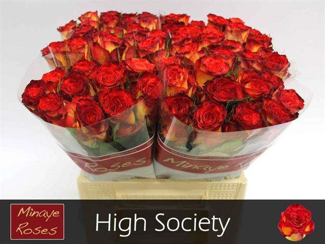 <h4>R GR HIGH SOCIETY</h4>