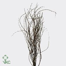 Berk ( Birch ) Natural 60