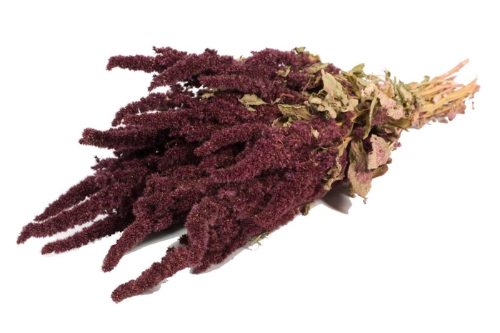 Amaranthus Red nat. Craft