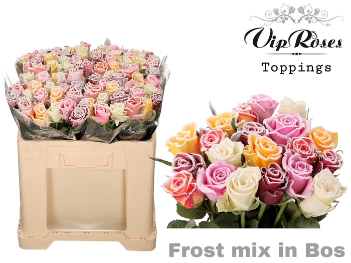 R GR FROST MIX IN BOS
