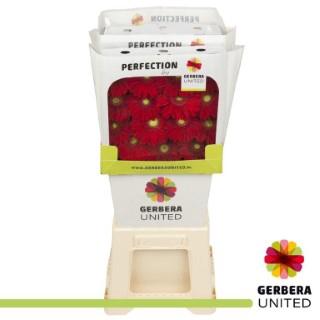 <h4>Gerbera Carambole</h4>
