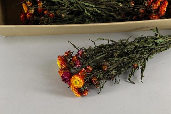 <h4>Df Helichrysum Orange Bs</h4>