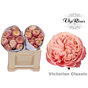 R GR VICTOR CLASSIC@